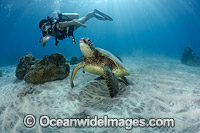 Scuba Diver and Green Sea Turtle Photo - David Fleetham