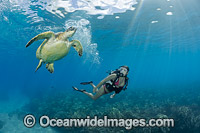 Diver and Green Sea Turtle Photo - David Fleetham
