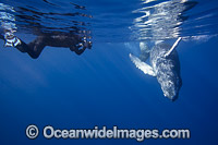 Photographing Humpback Whale Photo - David Fleetham