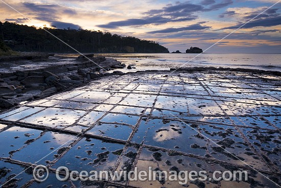 Tessellated Pavement, during pre-dawn sunrise. This natural rock pavement bears this name because it is fractured into polygonal blocks that resemble tiles of a mosaic floor. Eaglehawk Neck, Tasman Peninsula, Tasmania, Australia. Photo - Gary Bell