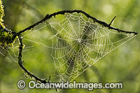 Spider web Photo - Gary Bell