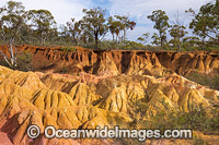 Pink Cliffs Geological Reserve Photo - Gary Bell