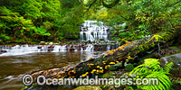 Liffey Falls Tasmania Photo - Gary Bell