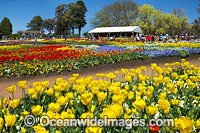 Floriade Festival Canberra photo