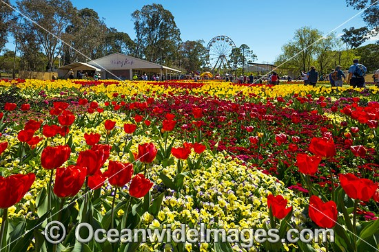 Floriade Festival, Commonwealth Park, Canberra, Australian Capital City, Australia. Floriade is Australia's biggest celebration of Spring that runs each year in Canberra during the months of September and October. Photo - Gary Bell