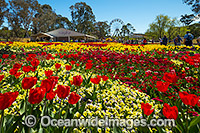 Floriade Festival Canberra Photo - Gary Bell