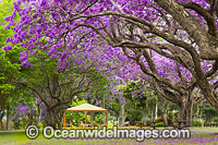 Jacaranda Park Grafton photo