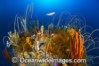 Tasmania Underwater Reef Photo - Gary Bell