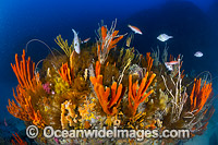 Temperate Reef Tasmania Photo - Gary Bell