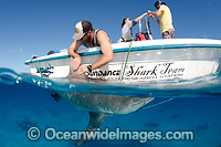 Bull Shark getting tagged photo
