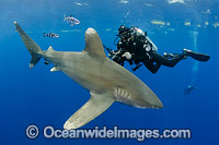 Oceanic Whitetip Shark Bahamas Photo - Andy Murch
