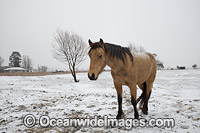 Horse standing in snow field Photo - Gary Bell