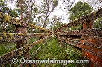 Old timber stockyard fence Photo - Gary Bell