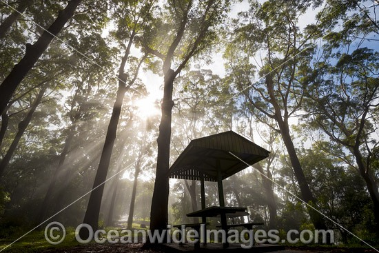 Eucalypt forest and picnic shelter cloaked in mist, situated in the Bruxner Park Flora Reserve. Coffs Harbour, New South Wales, Australia. Photo - Gary Bell