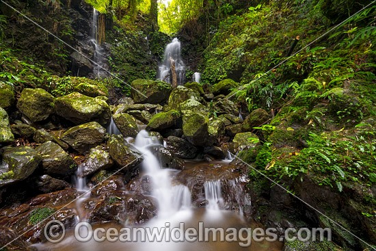 Rainforest Waterfall, situated in the Dorrigo World Heritage National Park, New South Wales, Australia. Photo - Gary Bell
