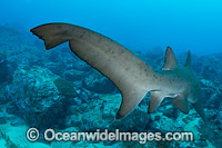 Grey Nurse Shark tail fin Photo - Gary Bell