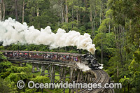 Puffing Billy Belgrave Bridge Photo - Gary Bell
