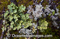 Rainforest moss Tasmania Photo - Gary Bell
