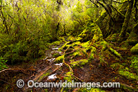 Cradle Mountain Rainforest Photo - Gary Bell