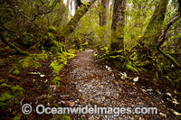 Weindorfers Forest Cradle Mountain Photo - Gary Bell