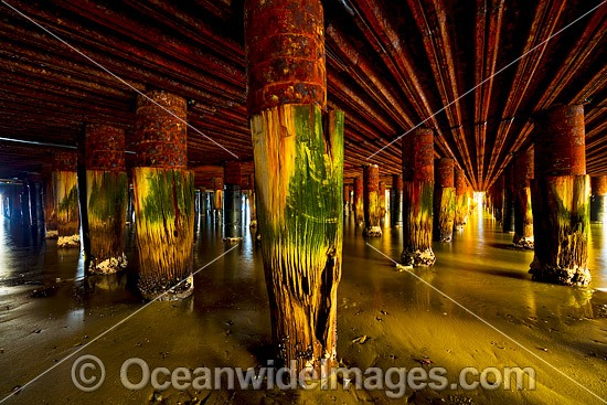 Beneath the Historic Prince's Pier. Built in 1915, it was originally named New Railway Pier, until renamed Prince's Pier after the Prince of Wales visited Melbourne in 1920. Port Phillip Bay, Melbourne, Vic, Australia. Photo - Gary Bell