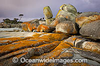 Lichen covered granite bouders at Binalong Bay, The Bay of Fires. Tasmania, Australia. Photo: Gary Bell
