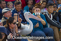 Spectators with Pelicans image