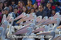 Spectators with Pelicans Photo - Gary Bell