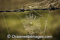 Spider web on wire fence Photo - Gary Bell