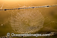 Spider web on barbed wire Photo - Gary Bell