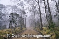 Track through Snow Gum woodland Photo - Gary Bell