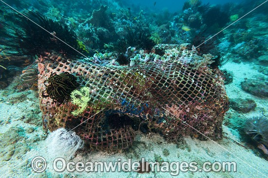 Reef Destruction. A Fishing Net caught up on a tropical coral reef, situated off Anilao, Philippines. Photo - Gary Bell