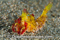Shrimp Coral Triangle Photo - Gary Bell