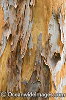 Gum Tree bark Photo - Gary Bell