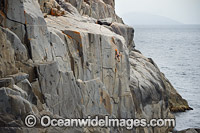 Rock Climbers White Water Wall image