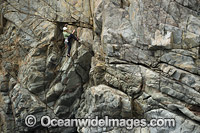 Rock Climber Beowulf Wall Photo - Gary Bell