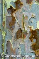 Spotted Gum bark Photo - Gary Bell