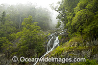 Dorrigo Waterfall Photo - Gary Bell