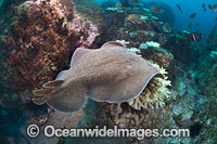 Electric Ray Photo - Gary Bell