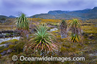 Cradle Mountain Tasmania image