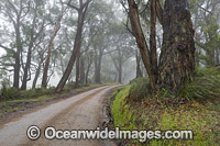 Track through Eucalypt Forest Photo - Gary Bell