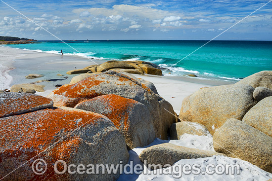 Lichen covered granite boulder coastline. Bay of Fires, Tasmania, Australia. Photo - Gary Bell