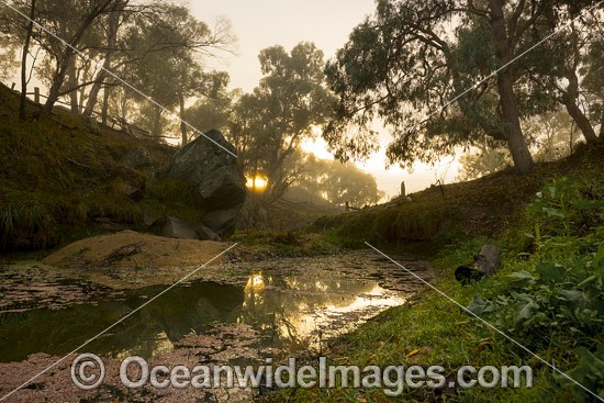 Water course gully on farmland with Eucalypt forest cloaked in mist at sunrise. Northern Tablelands, New South Wales, Australia. Photo - Gary Bell