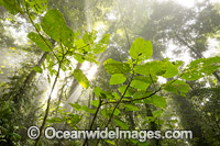 Rainforest in mist Photo - Gary Bell