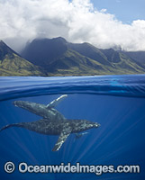 Humpback Whales Photo - David Fleetham