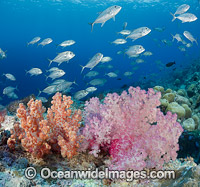 Reef and Fish photo