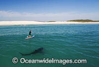 Paddle board over Shark Photo - Chris & Monique Fallows
