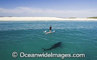 Paddle board over Shark photo