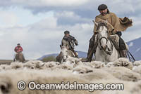 Chilean Rancheros herding sheep Photo - Chris & Monique Fallows