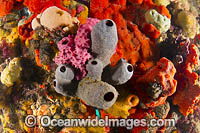 Sea Sponges Blairgowrie Pier Photo - Gary Bell